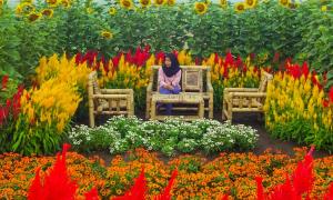 resoinangun garden